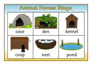 animal homes animal homes primary teaching resources printables