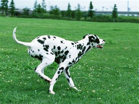 best dogs for running best dogs for running put your shoes on and