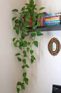 Home Decor With Plants 25 best ideas about indoor hanging plants on pinterest