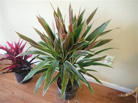 hawaiian house plants tropical house plants names