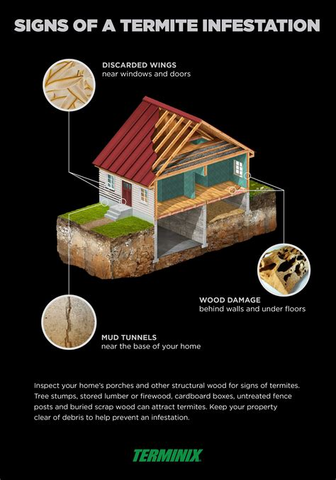 signs of termite infestation probrains org