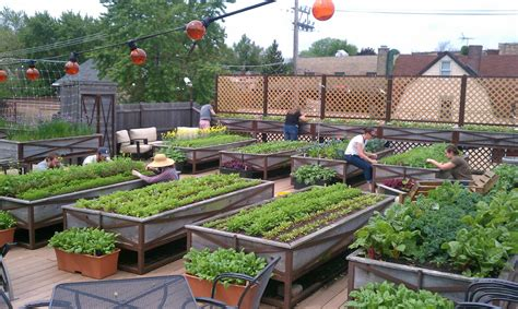 rooftop vegetable garden ideas and photos