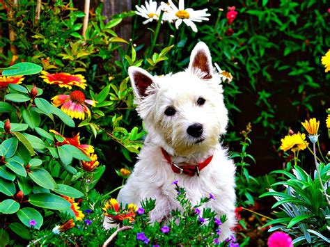 pressing in dogs gardening 101 with dogs conscious companion