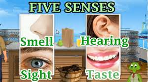The 5 senses sight hearing taste smell and touch preschool and