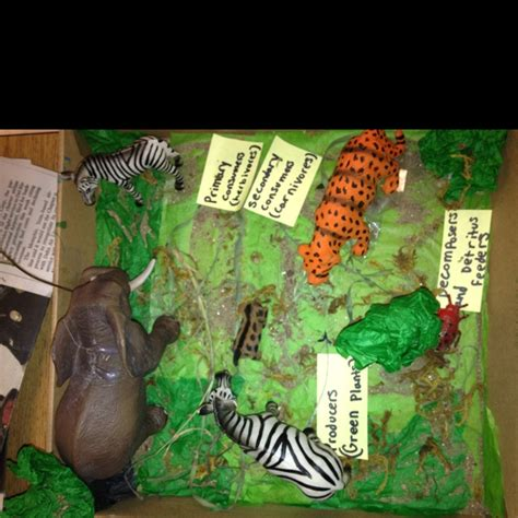 food webs on pinterest food chains science and food student project food web 3rd grade classroom