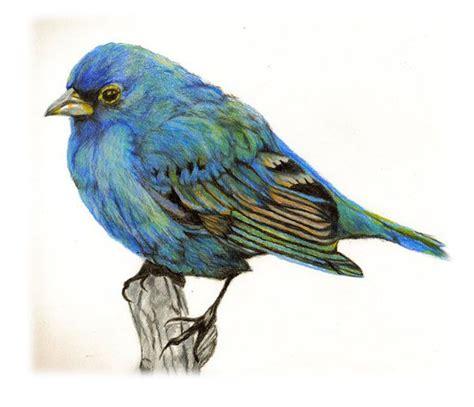 libro bird art drawing birds 40 beautiful bird drawings and art works for your inspiration beautiful birds colored pencils