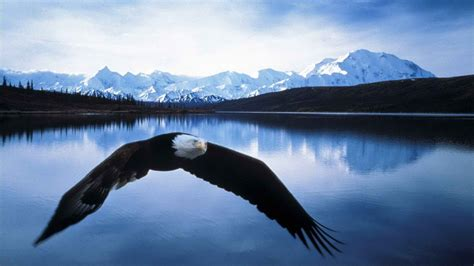 wallpaper for iphone 5 eagle bald eagle wallpaper hd images one hd wallpaper pictures