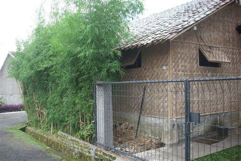 saung suung farm budidaya jamur tiram putih