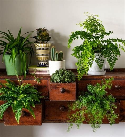 how to decorate home with plants 25 best ideas about house plants on pinterest plant