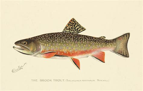 Metal Fish Wall Decor Denton Brook Trout Painting By Gary Grayson