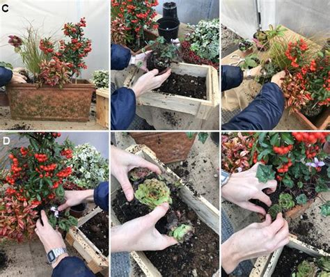 Piante Invernali Da Esterno Vaso by Composizione In Vaso Di Piante Invernali Sempreverdi