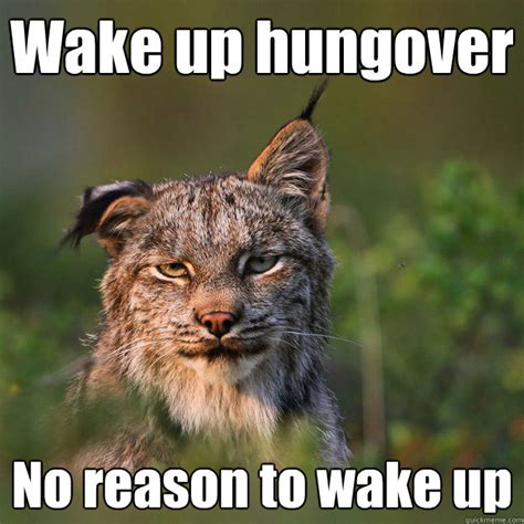 Hung Over Meme - hungover cat meme www imgkid com the image kid has it