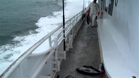 galveston party boats new buccaneer galveston party boats inc tuna fishing 2 jan 29 30 2011