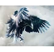 Blue Eagle Design HD Wallpaper  Vector &amp Designs Wallpapers
