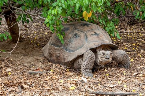 galapagos islands animals the 14 most unique galapagos animals travel addicts