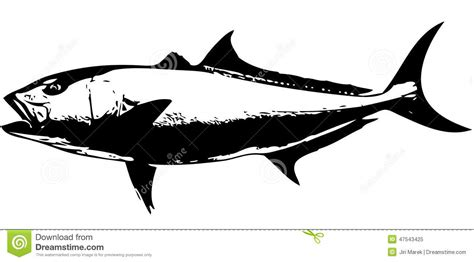 amberjack fish vector stock vector image of fish
