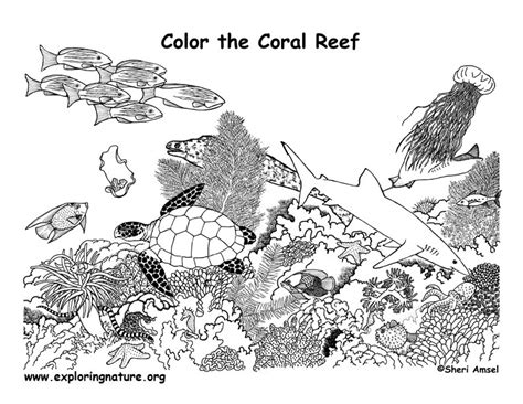 coral reef coloring page exploring nature educational