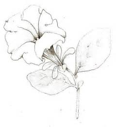 Summer Flowers For Weddings - tutorial botanical drawing with pencil and watercolor