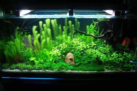 indo modern gallery aquascape discus fishaquascape