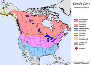 canada goose migration map ky inquirer call of the goose