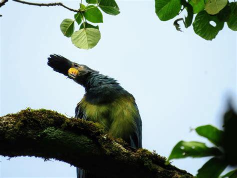 50 awesome birds you can see in uganda sidewalk safari