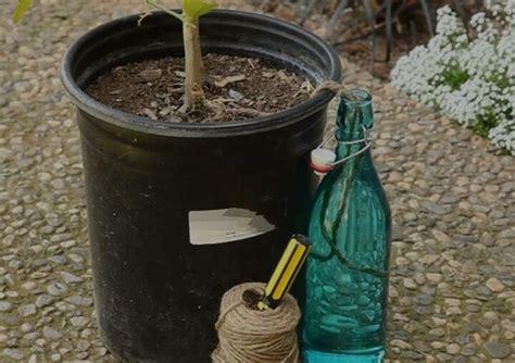 watering plants   vacation eco garden