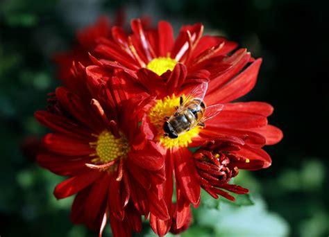 mandare fiori nel mondo 10 piante da coltivare per attirare le api e nutrirle