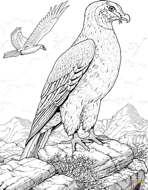 301 Moved Permanently Birds Of Prey Coloring Pages