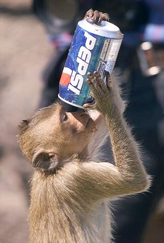 animals     human monkey drinks pepsi soda