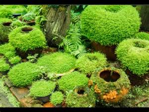 how to grow moss garden indoor youtube