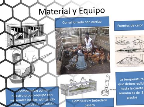 Prctico Para La Construccin De Corrales Y Manejo De Aves Y C   manual para la construcci 243 n de corrales y manejo de aves