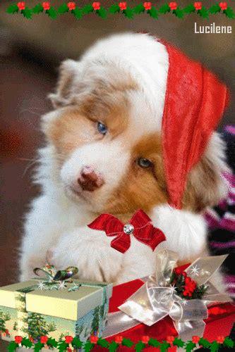 magic  christmas  christmas puppy christmas cats