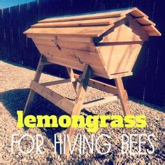 backyardhive new dvd alternative beekeeping using the top the world s catalog of ideas