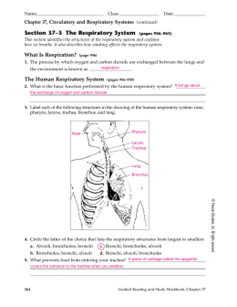 Section 37 3 The Respiratory System by Chapter 2