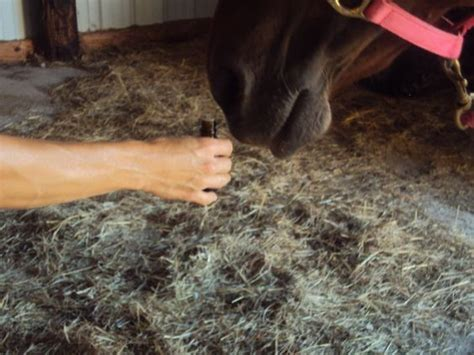 essential oils for skin allergies essential oils for equine allergies a list of oils beneficial for skin or lung