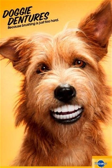 dogs with human teeth i if these dentures bilateral balancing contacts on all four