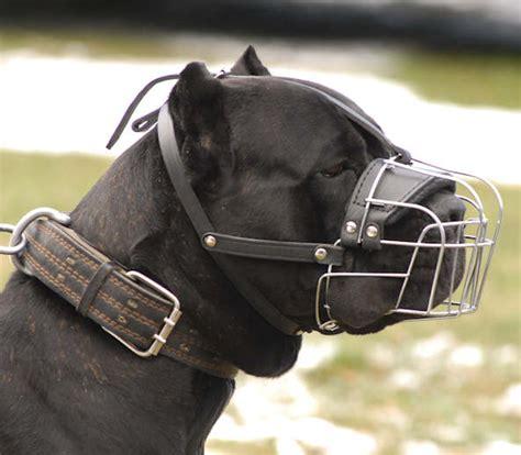 large muzzle corso wire basket muzzle large muzzle m4 1079 wirebasket muzzle