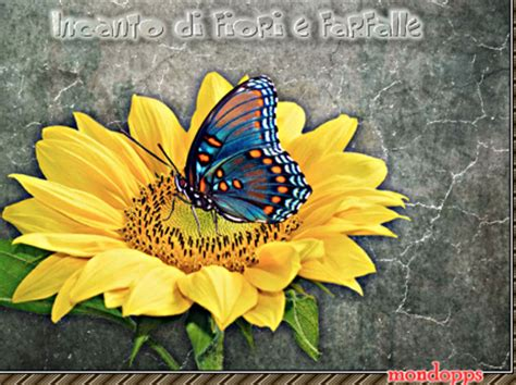 foto fiori e farfalle pps poesie e frasi