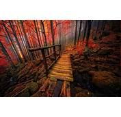 Nature Landscape Forest Colorful Bridge Fall Mist