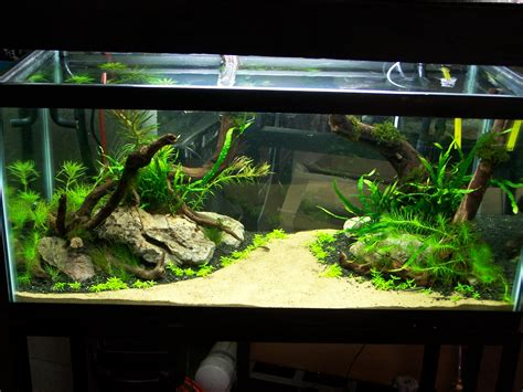 Small Tank Aquascaping by 1000 Images About Aquariums On Aquarium