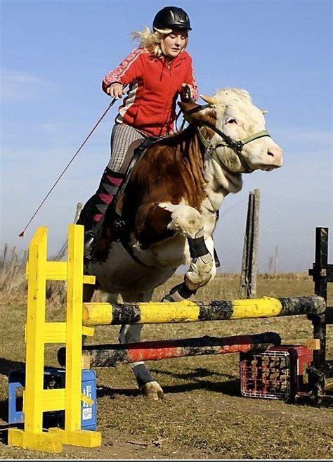 imagenes vaqueras nuevas mandar postal vacas vaqueras