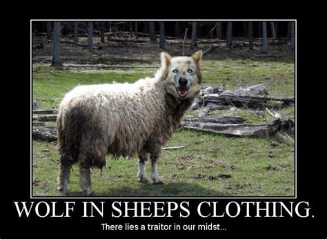 new year sheep phrases wolves in sheeps clothing quotes quotesgram