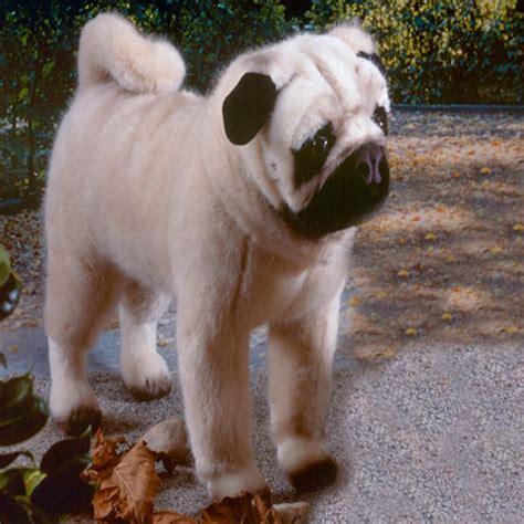 realistic stuffed pug k 246 sen usa 5890 sir henry pug standing