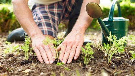 wann pflanzt was im garten gartenkalender im mai wird im garten gepflanzt