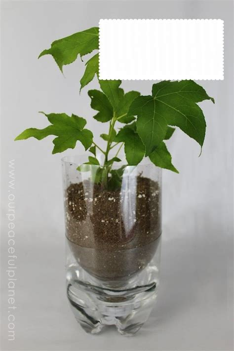 fazer plantas como fazer vasos de plantas garrafa pet
