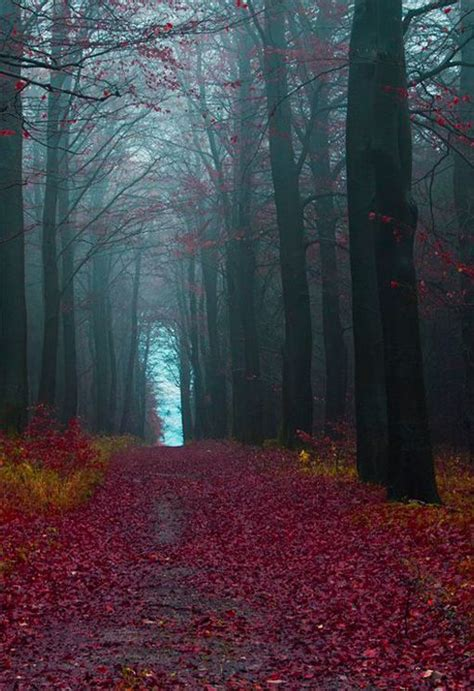 the black forest germany best 25 black forest germany ideas on black