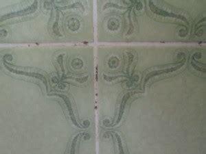 schimmel in dusche entfernen 5279 schimmel in der dusche schimmel effektiv entfernen