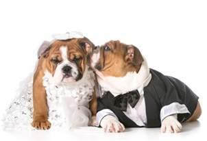 puppy wedding true tips for a woof tastic wedding