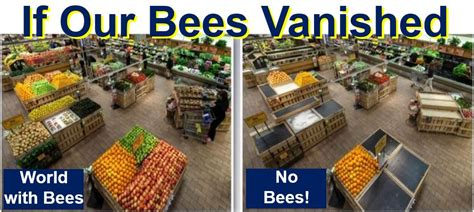 Do You Grocery Shop With Or Without A List by Save The Bees Youth Are Awesome