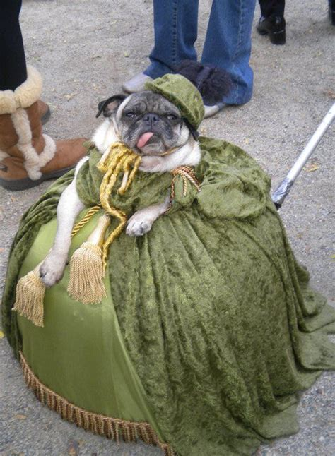 pug frog costume 37 best images about pugs in costumes d on